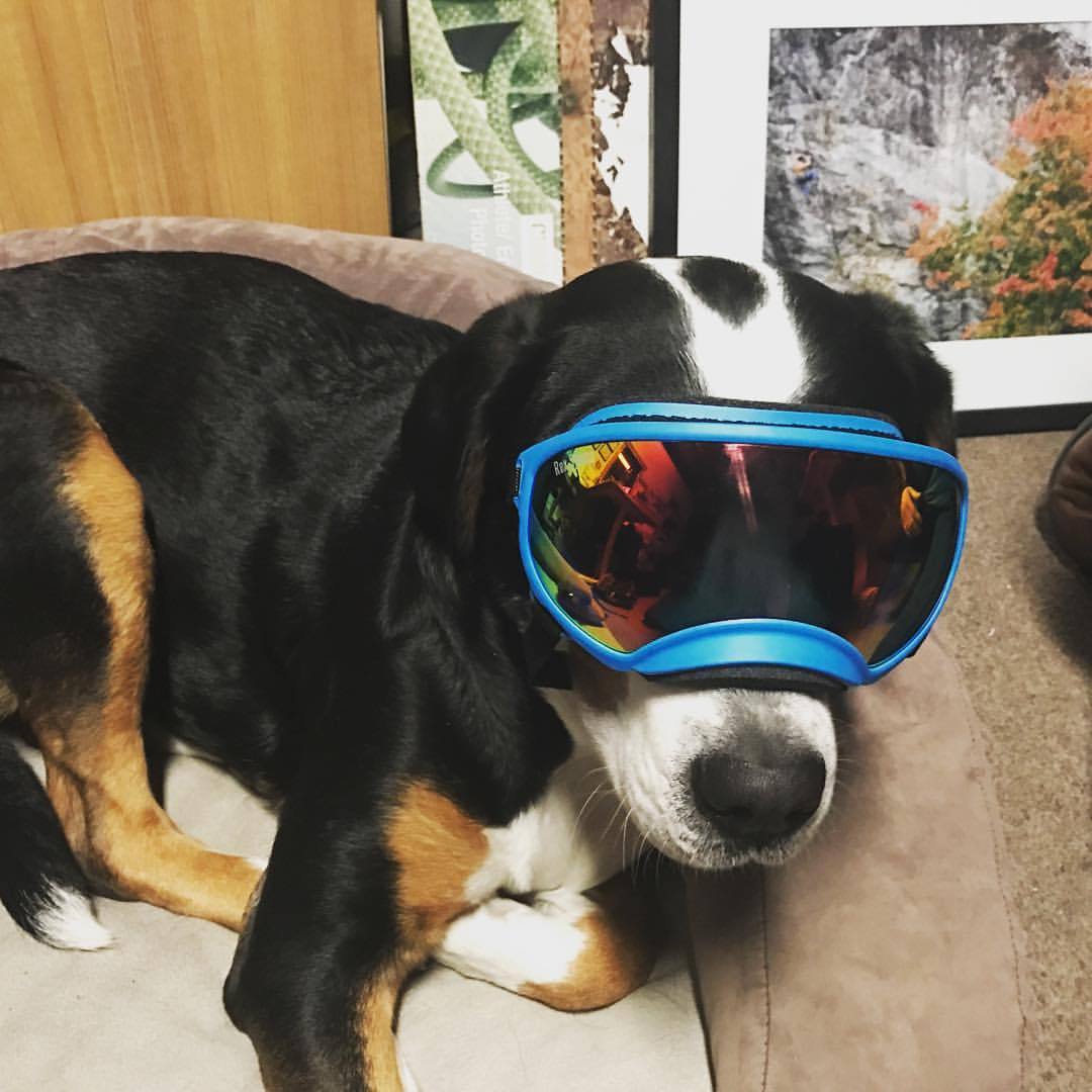 #skadidog test fitting her new Rex Specs!!! Bring on the blower pow!!!! #chistmascameearly #rexspecs #skidog — at Petra Cliffs Climbing Center & Mountaineering School.